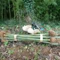 bambous-foussais